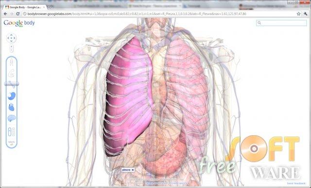 Body Browser — атлас людського тіла